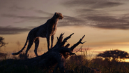 Lionking2019-animationscreencaps.com-40