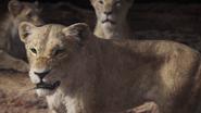 Lionking2019-animationscreencaps.com-7286