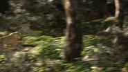 Lionking2019-animationscreencaps.com-9030