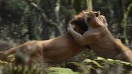 Lionking2019-animationscreencaps.com-9111