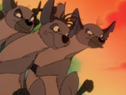 BTB hyenas25