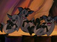 CTAY hyenas8