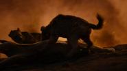Lionking2019-animationscreencaps.com-11933