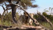Lionking2019-animationscreencaps.com-2717
