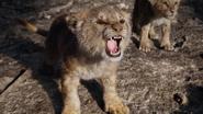 Lionking2019-animationscreencaps.com-3307