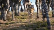 Lionking2019-animationscreencaps.com-2416