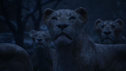 Lionking2019-animationscreencaps.com-12615