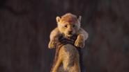 Lionking2019-animationscreencaps.com-407