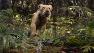 Lionking2019-animationscreencaps.com-9006