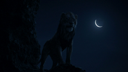Lionking2019-animationscreencaps.com-4306