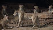 Lionking2019-animationscreencaps.com-7261
