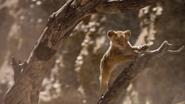 Lionking2019-animationscreencaps.com-4723