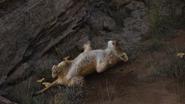 Lionking2019-animationscreencaps.com-1803