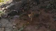 Lionking2019-animationscreencaps.com-1820
