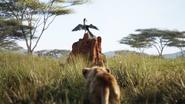 Lionking2019-animationscreencaps.com-1570