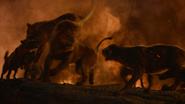 Lionking2019-animationscreencaps.com-11966