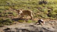 Lionking2019-animationscreencaps.com-1734