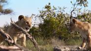 Lionking2019-animationscreencaps.com-2725