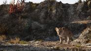 Lionking2019-animationscreencaps.com-2798