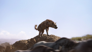 Lionking2019-animationscreencaps.com-4634