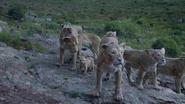 Lionking2019-animationscreencaps.com-5889