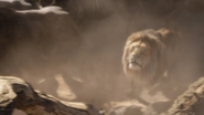 Lionking2019-animationscreencaps.com-4875
