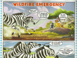 Wildfire Emergency