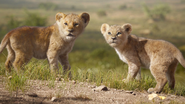 Lionking2019-animationscreencaps.com-2106