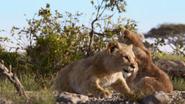 Lionking2019-animationscreencaps.com-2741