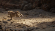 Lionking2019-animationscreencaps.com-5487