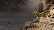 Lionking2019-animationscreencaps.com-5112
