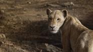 Lionking2019-animationscreencaps.com-7117
