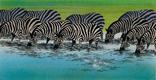 Lion-King-Concept-Art-Zebras