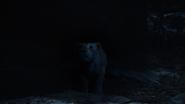 Lionking2019-animationscreencaps.com-7626