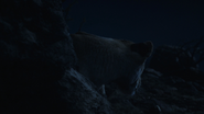 Lionking2019-animationscreencaps.com-7699