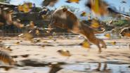 Lionking2019-animationscreencaps.com-2647