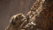 Lionking2019-animationscreencaps.com-4992