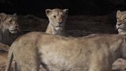 Lionking2019-animationscreencaps.com-7270
