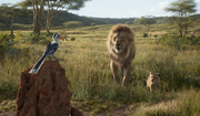 Zazu Mufasa and Simba 2019