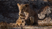 Lionking2019-animationscreencaps.com-2764