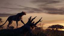 Lionking2019-animationscreencaps.com-35