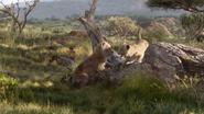 Lionking2019-animationscreencaps.com-2146