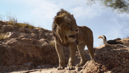 Lionking2019-animationscreencaps.com-4818