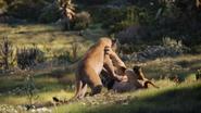 Lionking2019-animationscreencaps.com-9499