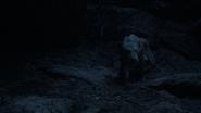 Lionking2019-animationscreencaps.com-7589