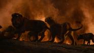 Lionking2019-animationscreencaps.com-11965