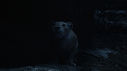 Lionking2019-animationscreencaps.com-7614