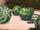 Tikiti melons