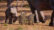 Lionking2019-animationscreencaps.com-2479