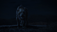 Lionking2019-animationscreencaps.com-7694
